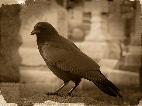 Crow In Sepia by Gothicrow Images