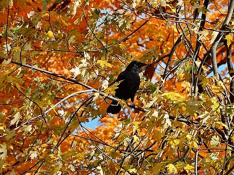 Crow In The Glowing Autumn Leaves by Gothicrow Images