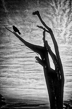 Crow On Broken Branch by Garry Gay