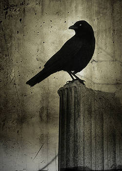 Crow On The Old Column by Gothicrow Images