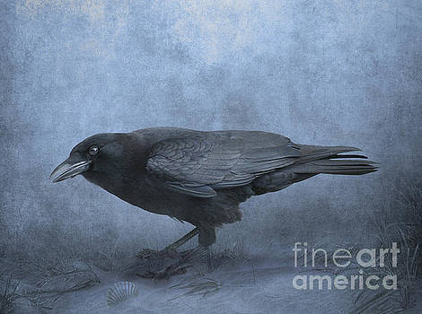 Crow searching for seashells by Lynn Jackson