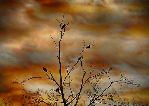 Crow Sunset by Gothicrow Images