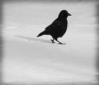 Gothicrow Images - Crow Swagger