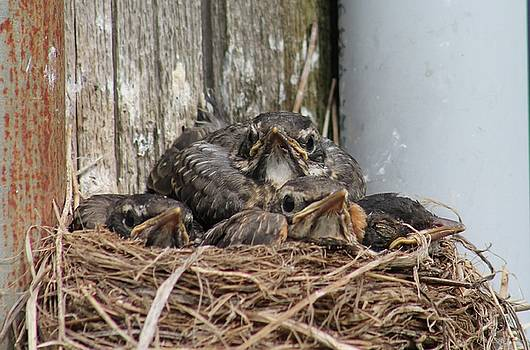 Crowded Nest  by Bethany Benike
