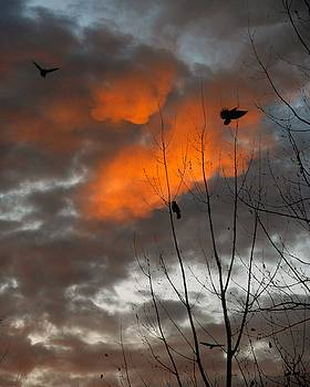 Crows Among Ominous Dark Clouds by Gothicrow Images