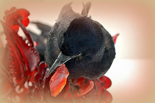 Crow's Feast by Lori Seaman