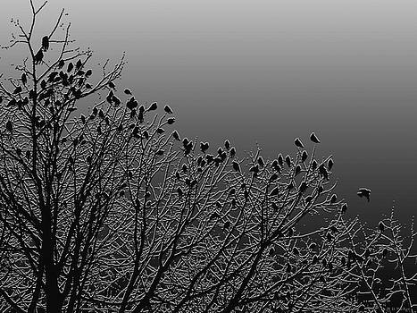 Crows in Trees in Charcoal by Celtic Artist Angela Dawn MacKay