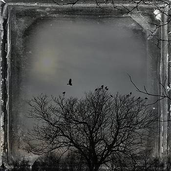 Crows On A Dark Gray Day by Gothicrow Images