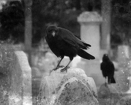 Gothicrow Images - Crows On Tombstones