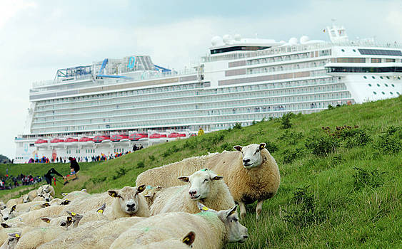 Cruise Liner and Sheeps by Steve K