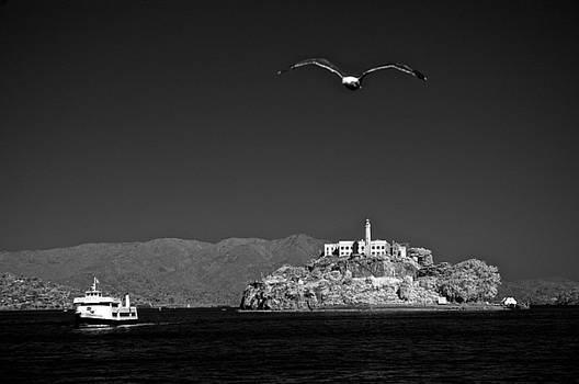 Cruising to Alcatraz by James Walsh