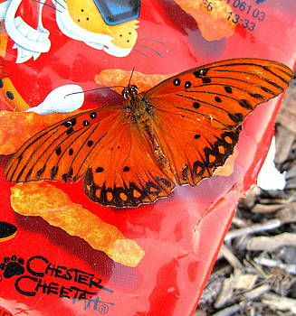Crunchy Flutterby by Radical Reconstruction Fine Art Featuring Nancy Wood