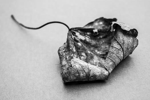 Stewart Scott - crunchy rotton decay