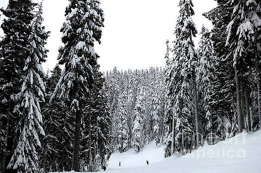 Crystal Mountain Skiing 2 by Tanya Searcy
