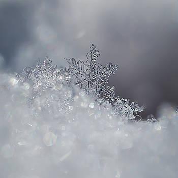 Crystal Snowflake by Beth Riser