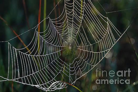 Crystal Web by Mike Dawson