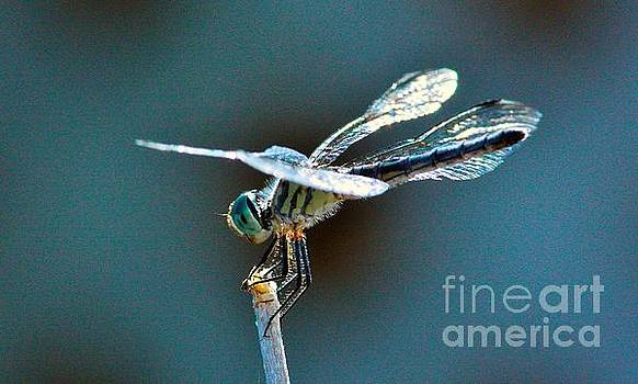 Crystal Wings by Marcia Breznay