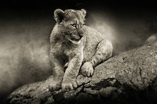 Cub by Christine Sponchia