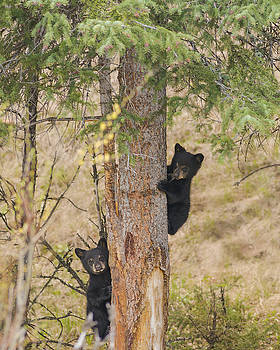 Scott Wheeler - Tree Huggers