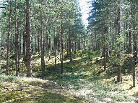 Culbin Forest by Oberon   Ahura Star