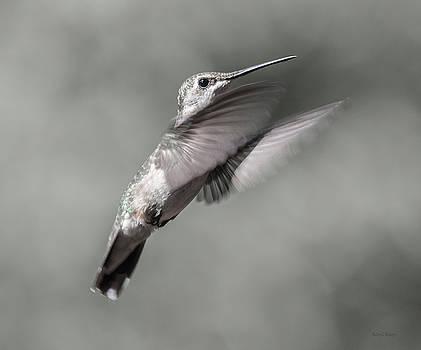 Cumberland Gap Hummingbird Small but Mighty by Betsy Knapp