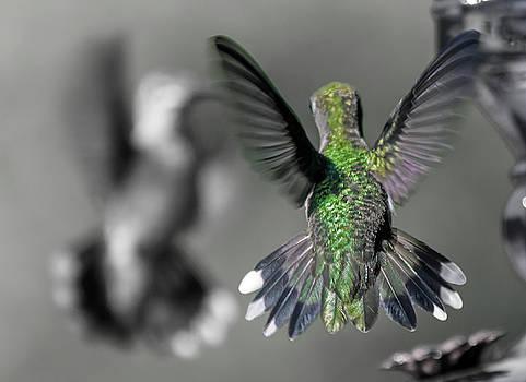 Cumberland Gap Hummingbirds by Betsy Knapp