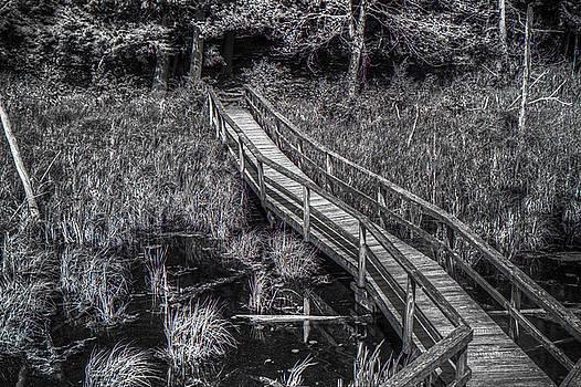 Cumming Nature Center Bridge by Tim Buisman