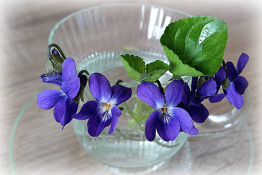 Cup Of Violets by Marinela Feier