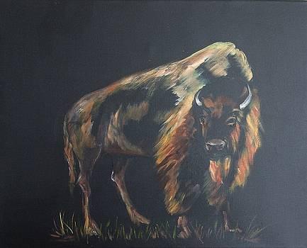 Curious Bison by Ellen Canfield