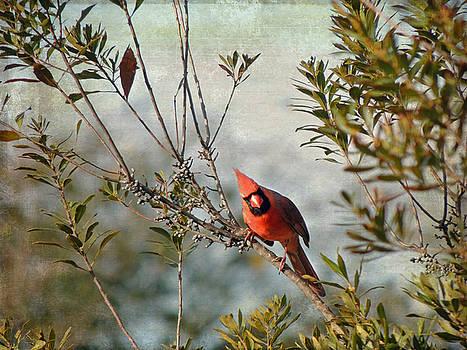 Jayne Wilson - Curious Cardinal