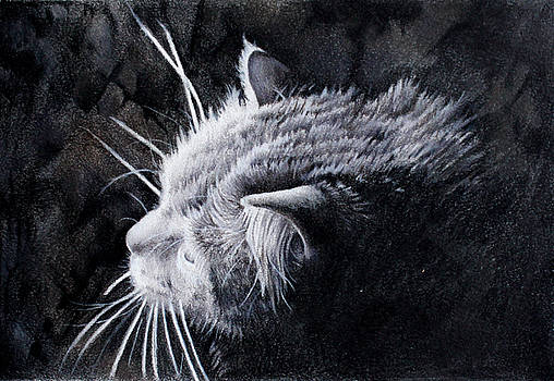 Curious Cat by Kay Walker
