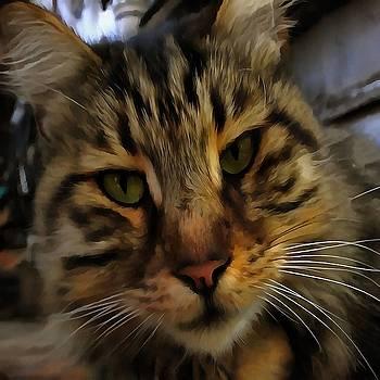 Tracey Harrington-Simpson - Curious Cat