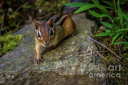 Curious chip by Claudia M Photography