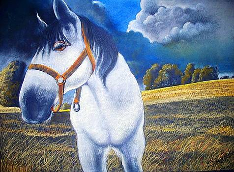Curious Colt by Sharon Wright