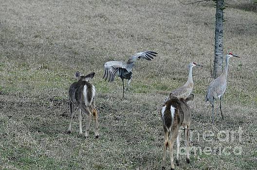 Curious Deer by Sandra Updyke