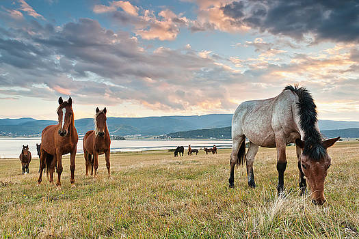Curious Horses by Evgeni Dinev