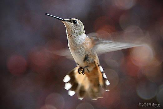 Curious Hummingbird by Melisa Meyers