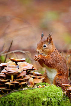 Curious Little Fellow by LHJB Photography