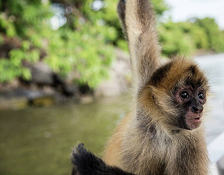 Curious Monkey by Michael Santos