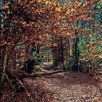 Curious Path in Autumn by Richard Hinds