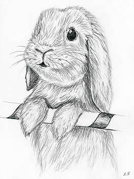Curious rabbit by Sergey Lukashin