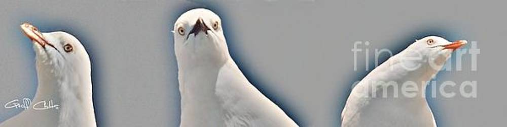Curious Seagull by Geoff Childs