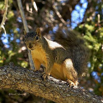 Kae Cheatham - Curious Squirrel