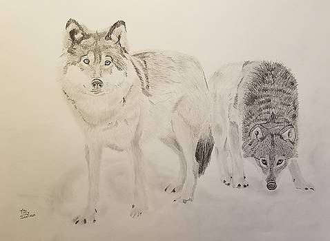 Curious Wolves by Tito Santiago