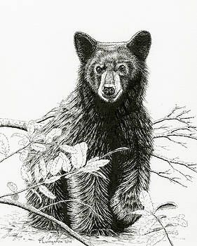 Timothy Livingston - Curious Young Bear
