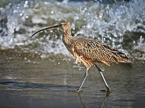 Curlew and tides by William Freebilly photography