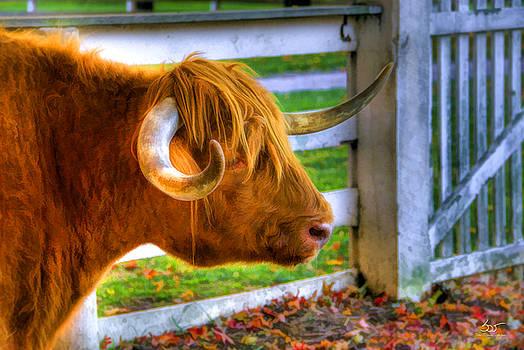 Sam Davis Johnson - Curly Horn Beastie