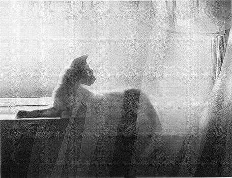 Curtain Light by Robert Foster