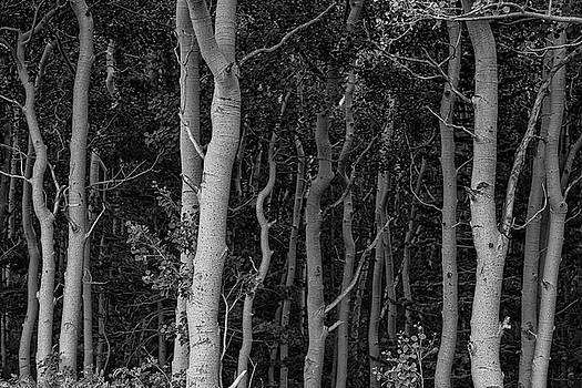 Curves of a Forest by James BO Insogna