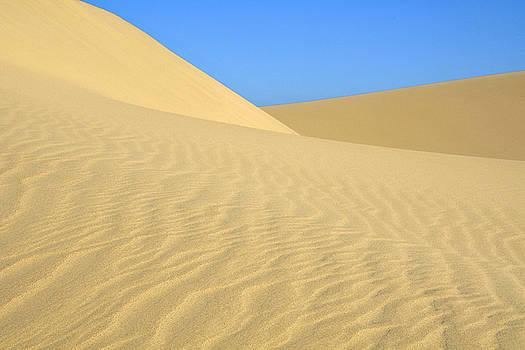 Lara Ellis - Curving Dunes